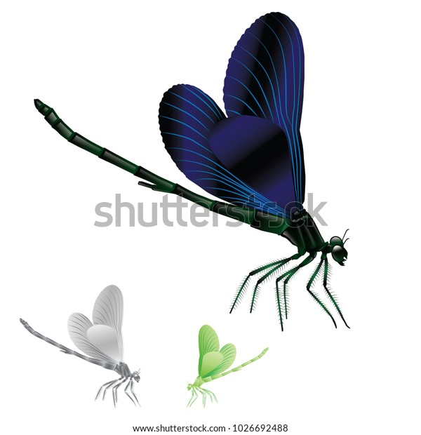 dragonfly animal vector