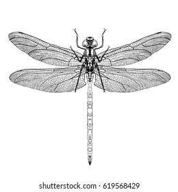 Dragonfly. Black dragonfly on white background isolated. Hand-drawn vector illustration.