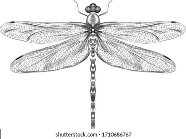 dragonfly black and white sketch with delicate wings vector illustration black and white sketch