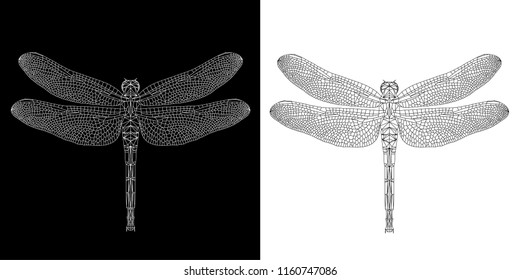 Dragonfly (damselfly) abstract low poly wireframe isolated on black and white background, EPS10 symmetrical vector illustration. Insect with geometry triangle. Polygonal style trendy abstract concept.