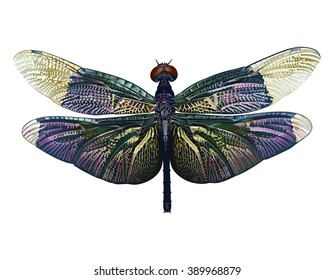 Dragonfly. Hand drawn vector illustration of a dragonfly with iridescent colors on transparent background.