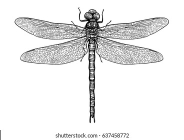 Dragonfly illustration, engraving, drawing, ink, vector