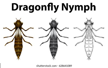 Dragonfly nymph in three different drawing styles illustration