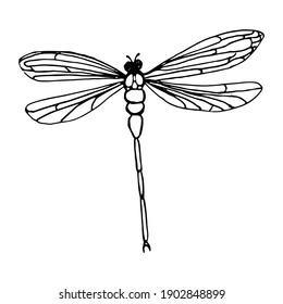 dragonfly in the style of dudule on a white background.