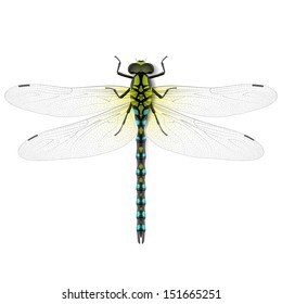 Dragonfly. Vector.