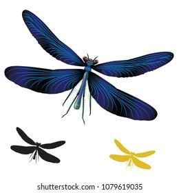 dragonfly, vector, animals