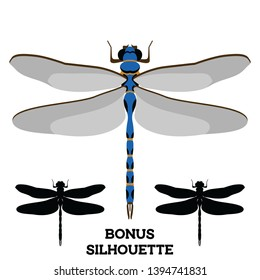 Dragonfly vector cartoon and silhouette