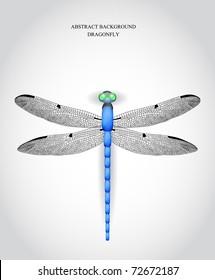 Dragonfly. Vector illustration