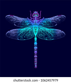 Dragonfly. Vector Seamless Pattern. Dark blue backgrounds. Summer night.