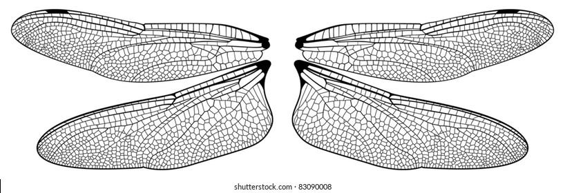 dragonfly wings images stock photos vectors shutterstock