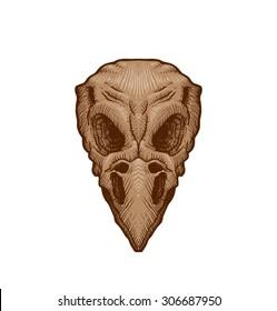 Drawing bird skull, vector