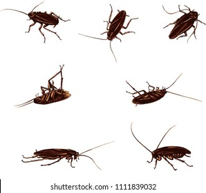 drawing of a black and color cockroach, isolated silhouettes