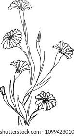 drawing of a bunch of cornflower, a sketch of a hand-drawn vector illustration