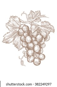 Drawing of a bunch of red grapes with green leaves on vine