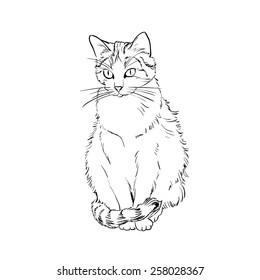 Drawing cat, vector sketch
