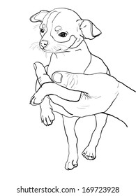The drawing of chihuahua in human hand
