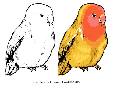 Lovebirds Drawing Images Stock Photos Vectors Shutterstock