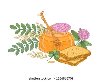 Drawing of dipper in glass jar of honey, pair of bread slices or toasts, clover flower and acacia inflorescence. Appetizing wholesome dessert. Colorful hand drawn vector illustration in antique style.