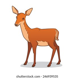 Drawing of a female deer. Vector illustration.