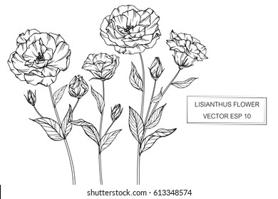 Drawing flowers. Lisianthus flower vector illustration and clip art on white backgrounds.