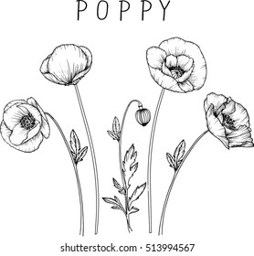 drawing flowers. poppy flower clip-art or illustration.