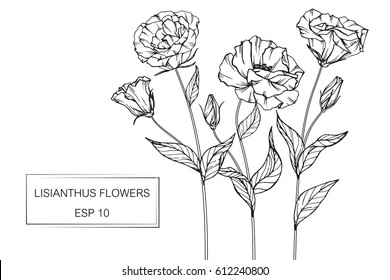 Drawing flowers. Vector collection set of lisianthus flower by hand drawing on white backgrounds.