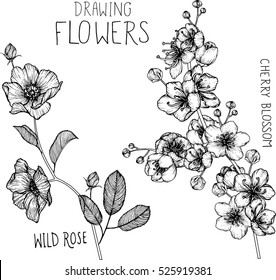 drawing flowers. Wild roses and cherry blossom clip-art or illustration.