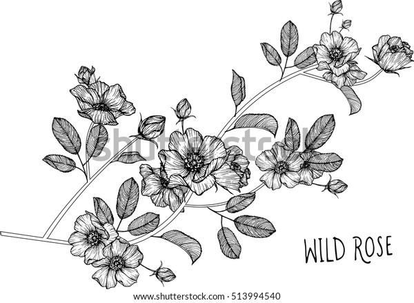 tegning blomster. Valmue blomst clip-art eller Lagervektor (royaltyfri)  513994567