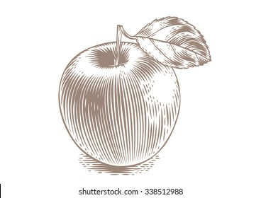 Drawing of fresh apple with leaf on the white background
