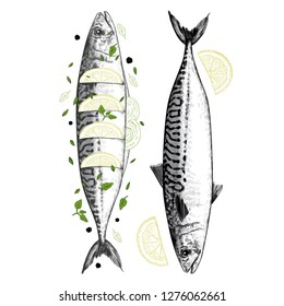 Drawing of fresh mackerel and  baked mackerel with lemon. Image of two fish, lemon slices, onion, thyme, pepper and salvia.  Vector vintage  illustration. Color sketch.