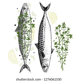 Drawing of fresh mackerel and mackerel cooked with herbes de Provence. Image of two fish, lemon slices, thyme, pepper and salvia. Vector vintage  illustration. Color sketch.
