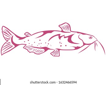 drawing of a freshwater fish