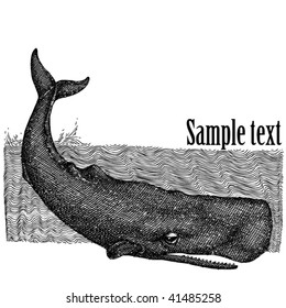 drawing of a giant sperm whale-book illustration