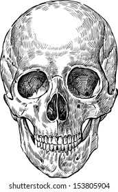 Skull Drawing Images Stock Photos Vectors Shutterstock