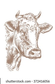 Drawing of isolated cow head with horns on the white