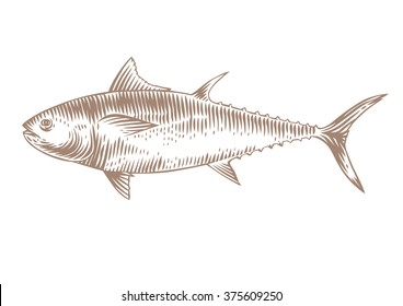 Drawing of isolated raw tuna on the white background
