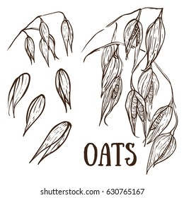 Drawing of oat sketch set on the white background