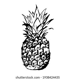 A drawing of a pineapple made by hand. Pineapple drawn with pen and pencil. Vector eps illustrator.