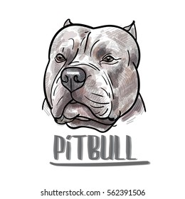 Drawing of pitbull head on white background,vector illustration