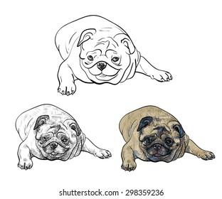 Drawing pug dog lying on white background