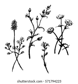 drawing set collection of wild flowers sketch ink hand drawn vector illustration
