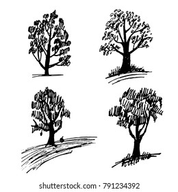 drawing of a set of four leafy trees sketch of a hand-drawn vector illustration