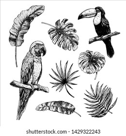 Drawing set of tropical leaves with birds toucan and macaw parrot. Isolated elements on white background. Vintage style. Hand drawn graphic design. Black-white illustration. Vector sketch.