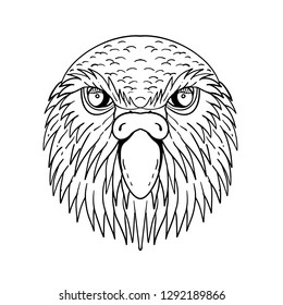 Drawing sketch style illustration of head of kakapo, night parrot or owl parrot, a species of flightless, nocturnal, ground-dwelling parrot endemic to New Zealand done in black and white.