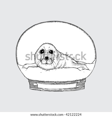 drawing snow globe harp seal stock vector royalty free 42122224