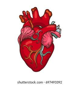 Drawing of stylized Human Heart