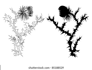 drawing thistle black and white and silhouette