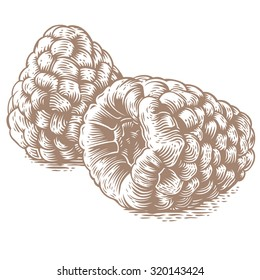 Drawing of two raspberries on the white background