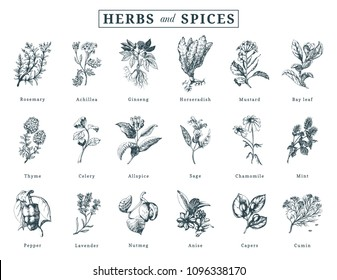 Drawn herbs and spices vector set. Botanical illustrations of organic, eco plants. Used for farm sticker, shop label etc.