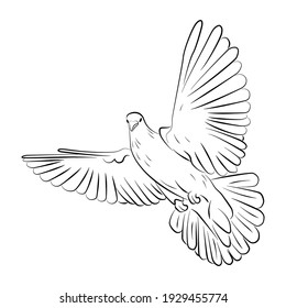 Drawn white flying dove on a white background. Coloring Pages.